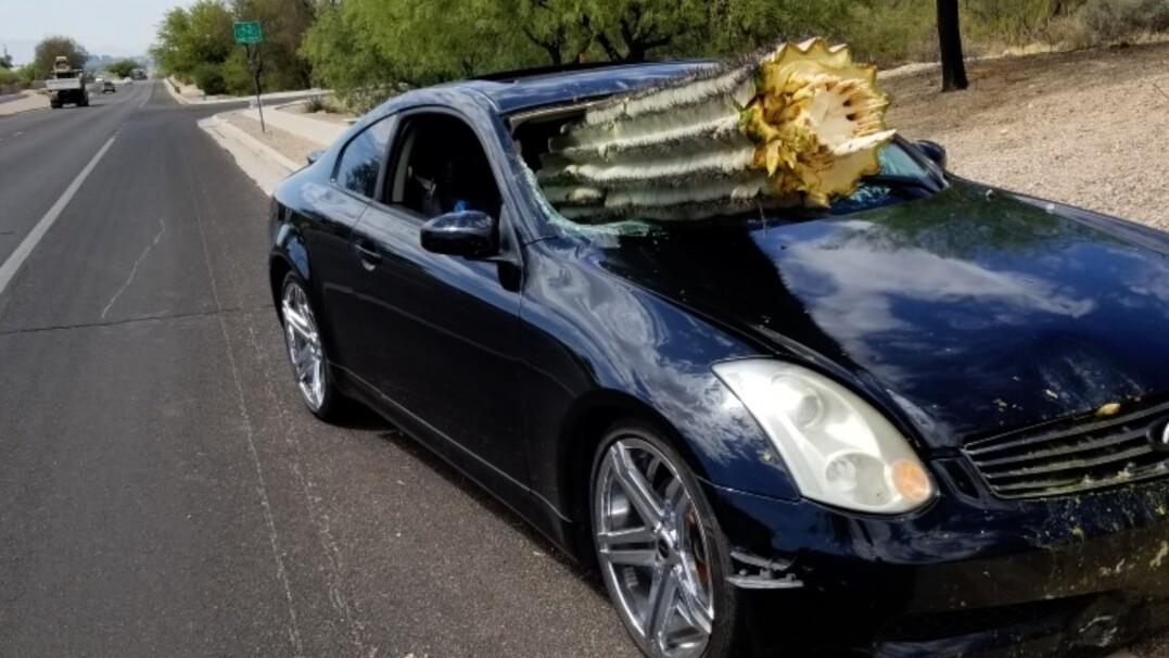 Kierowca wjechał wprost w kaktusa