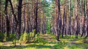 Czerwiec przyniósł w Polsce ponad 800 pożarów lasów. A upały dopiero przed nami