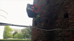 Kot w potrzasku. Zaklinował się w murze