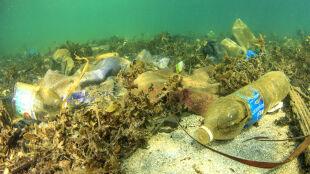 """Owady mogą przenosić mikroplastik. """"Jest obecny wszędzie, nie tylko w morzach"""""""